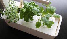 Erbe aromatiche, il giardino tecnologico e intelligente