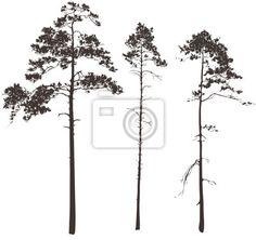 Fotobehang pijnboom