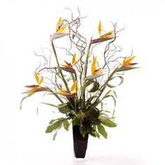 Tropical flowers otherwise known as Birds of Paradise, stunningly arranged with contorted willow, fountain grass and fatsia leaves in a modern black vase.