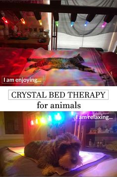 One of the main benefits of Chacrys Crystal Bed is that the therapy gives your animals very relaxed experience. The energy from rock crystals creates harmony within all chakras! Crystal Holder, Tree Of Life Symbol, Sacred Geometry Symbols, Great Pyramid Of Giza, Research Scientist, Pyramids Of Giza, Crystal Shapes, Light Beam, Light Therapy