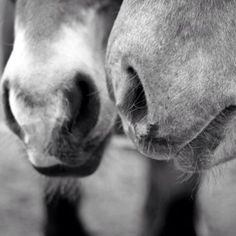 Mother and daughter, my old horses at home.
