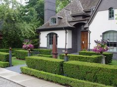 1000 images about backyard front yard landscaping ideas for Evergreen landscapes christchurch