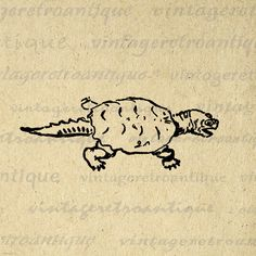 Snapping Turtle Printable Graphic Digital by VintageRetroAntique