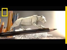 Step into a Miniature World of Animated Paper Wildlife | Short Film Showcase.