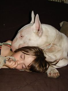 Bull Terrier Funny, American Pit Bull Terrier, British Bull Terrier, Mini Bull Terriers, English Bull Terriers, Pitbull Terrier, Best Dog Breeds, Best Dogs, Bull Terriers Anglais