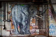 .elephant street art door.           t