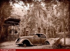 Old rusting car at ruins in the jungle pictures