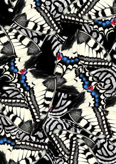 Nina Warmerdam's Imprints