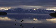 Ducks over Kronotskoye Lake