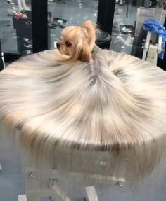 """U puddle thing get a haircut boi! 😍 lol the dog looks soo uncomfortable, like """"what are you doing back there? I'm very uncomfortable stop objectifying me The poor yorkie! Animal Jokes, Funny Animal Memes, Funny Animal Videos, Dog Memes, Videos Funny, Funny Memes, Baby Animals Super Cute, Cute Little Animals, Baby Animals Pictures"""