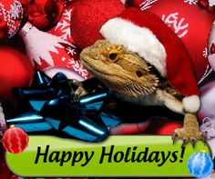Holiday Reptiles Holiday Deals, Holiday Gifts, Amphibians, Reptiles, Reptile Supplies, Picture Source, House And Home Magazine, My Boys, Happy Holidays