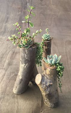 Simple, natural DIY succulent planters from tree branches! Step-by-step tutorial for these tree branch planters - I am obsessed with them! Pin now, and read later! diy garden tips DIY Tree Branch Planters for Succulents Succulent Planter Diy, Succulent Gardening, Diy Planters, Garden Planters, Planting Succulents, Container Gardening, Planter Ideas, Succulent Ideas, Organic Gardening