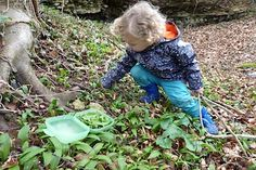 Cranham woods with a foraging toddler picking Wild Garlic leaves for pesto - published at nipitinthebud.co.uk Wild Garlic, Pesto, Garden Sculpture, Woods, Leaves, Outdoor Decor, Recipes, Woodland Forest