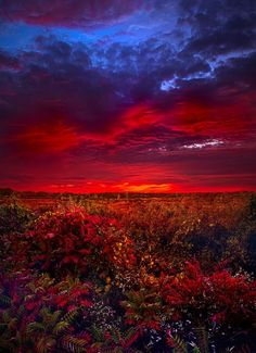 ❥‿↗⁀♥ simply- beautiful-world panatmansam: by Phil Koch Beautiful Sunset, Beautiful World, Beautiful Images, Pretty Images, Simply Beautiful, Photos Panoramiques, Landscape Photography, Nature Photography, Nature Pictures