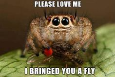 Ok, so spider& most insects freak me the fuck out. Whomever took this pic and added this caption really out did themselves . It really looks adorable & I would praise like I do when the cats bring me gifts.