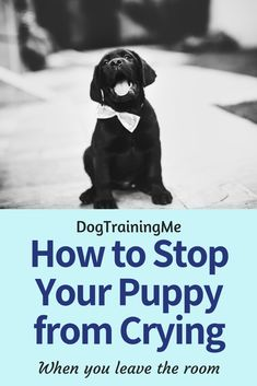 Puppy cries when you leave the room? Find out why your puppy cries and how you can solve this issue right now with the tips in our article. Teach your puppy to remain quiet and calm even in your absence. Stop Puppy From Biting, Puppy Biting, Dog Training Methods, Training Your Puppy, New Puppy, Puppy Love, Husky Puppy, Dog Crying, When You Leave