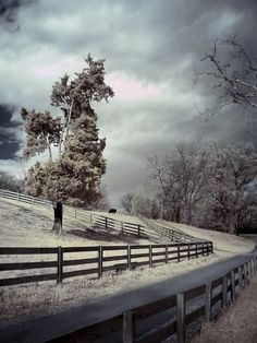 Tree photograph stormy fence moody surreal art by SherriConley, $30.00