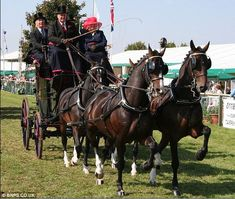 Riding high: Hackney horses, like those pictured here were once a common sight across the land carrying wealthy passengers in smart carriages All The Pretty Horses, Beautiful Horses, Hackney Horse, Horse Harness, Horse And Buggy, Types Of Horses, Pony Horse, Horse Carriage, Majestic Horse