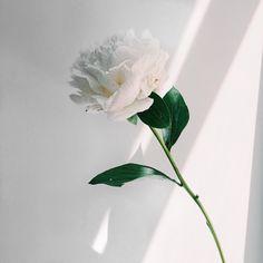 ❁aт nigнт yoυ нave a ligнт тнaт'ѕ pυre and wнiтe❁ aesthetic ~white~