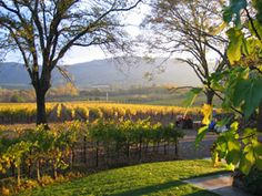 Arger-Martucci Vineyard...Odyssey is our current favorite red wine