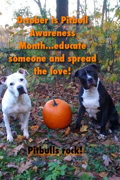 October is Pitbull awareness month