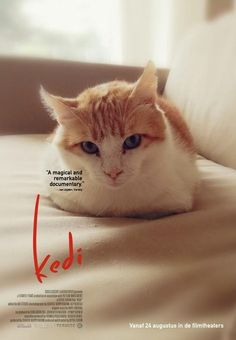Romero is on the movie poster of Kedi: Cats in Istanbul, a magical and remarkable documentary. You can make a movie poster with your own cat at http://www.kedifilm.nl/poster/