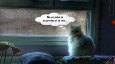 te veo #funny #cute #hyogathecat #estamostanagustito