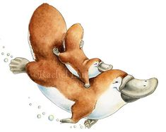 Just like Mum - Mom and baby Platypus Giclee Print, Original Artwork, Children's illustration, Nursery Wall Art Animal Sketches, Animal Drawings, Watercolor Animals, Watercolor Paintings, Australian Animals, Cute Illustration, Nursery Wall Art, Art Reproductions, Original Artwork