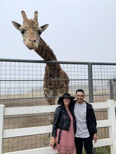 Malibu Wine Safari and Beer Garden Malibu Wine Safari, Malibu Wines, Beer Garden, Giraffe, Tours, Animals, Felt Giraffe, Animaux, Animal