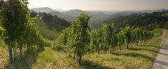 Gorgeous country house gite for adults only, in the French Pyrenees, perfect for lovers of wild spaces and beautiful scenery. Pyrenees, Fields, Growing Up, Vineyard, Scenery, River, French, Mountains, Country