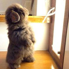 Cute overload!!!