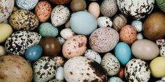 A Guide Toward Bird Egg Identification!