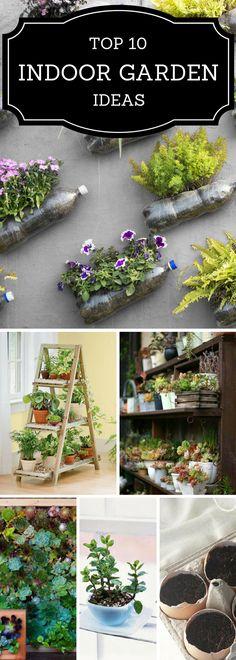 p i n t e r e s t : ⚪Candy Milk⚫ Inside Garden, Inside Plants, Love Garden, All Plants, Garden Plants, Indoor Plants, Container Gardening, Gardening Tips, Indoor Gardening