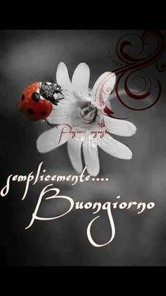 Saraseragmail.com.. C'è sempre qualcosa di magico in un nuovo giorno. Semplicemente Buongiorno a tutti! Start The Day, Good Morning, Cards, Pictures, Facebook, Hobby, Sicily, Snoopy, Kite