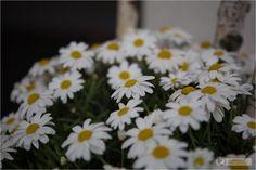 Flowers at Falkensteiner Hotel in Schladming, Austria – Wellness Hotel Österreich by Falkensteiner - #wellness #hotel #austria