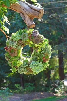 Instructions on how to make this beautiful succulent wreath! Instructions on how to make this beautiful succulent wreath! Diy Garden Projects, Garden Crafts, Garden Art, Herb Garden, Green Garden, Succulent Planter Diy, Succulent Wreath, Planter Ideas, Succulent Plants