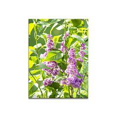 Blumenbild auf Leinwand, Fototapete oder Kunstdruck: Purpur Flieder mit maigrünem Laub