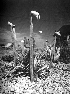 Derek Jarman. The garden at Prospect Cottage, 1989.
