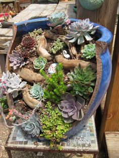 made by Succulent Gardens, Castroville, CA. made by Succulent Gardens, Castroville, CA. Succulent Rock Garden, Succulent Landscaping, Succulent Gardening, Garden Terrarium, Landscaping With Rocks, Growing Succulents, Succulents In Containers, Cacti And Succulents, Broken Pot Garden