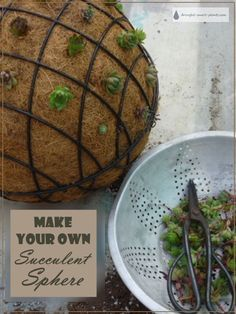 These intriguing Succulent Spheres are easy to make with just a few materials - find out exactly how to do it here...  Succulents | Garden Art DIY