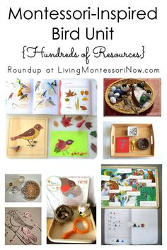 Hundreds of resources for a Montessori-inspired bird unit for multiple ages; perfect for classroom o Montessori Homeschool, Montessori Elementary, Montessori Classroom, Montessori Activities, Preschool Kindergarten, Learning Activities, Homeschooling, Seasonal Classrooms, Song Words