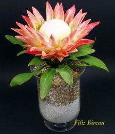 Kral Protea (King Protea) via the dauphine
