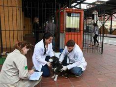 A prefeitura de Curitiba, no Paraná, observou a grande quantidade de moradores que ajudavam a cuidar... - Foto: Divulgação/SMCS