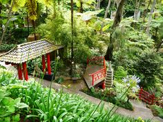 The lush greenery at the Tropical Gardens