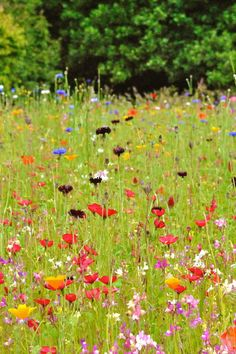 fields of flowers growing in joyful profusion