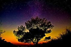 Star Tree Sunset on the Dune   By Alban Henderyckx