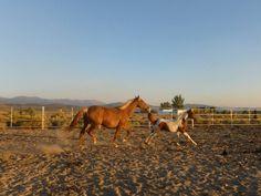 Dimond L Ranch Rescue