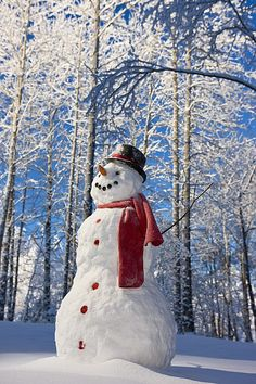 Snowman With Red Scarf And Black Top Hat Standing In Front Of Snow Covered Birch Forest Winter Eagle River Alaska Usa Canvas Art - Kevin Smith Design Pics x Winter Szenen, I Love Winter, Winter Magic, Winter Christmas, Merry Christmas, Christmas Snowman, Primitive Christmas, Country Christmas, 1950s Christmas