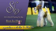 Westminster Kennel Club 2014 Terrier Breed Winners | Best In Show Daily | 2014