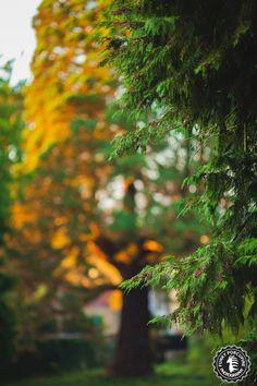 Manoj Sequoia on sunlight fire by Vincent Pelletier on Blur Image Background, Blur Background Photography, Desktop Background Pictures, Light Background Images, Studio Background Images, Picsart Background, Editing Background, Stock Background, Instagram Background
